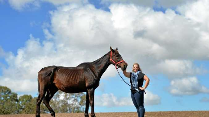 CONCERNS: Chrystle Campeao with horse London who she claims was mistreated by a previous owner.