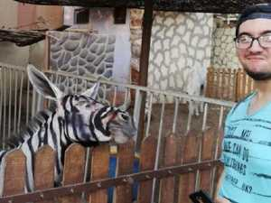 Zoo accused of painting donkey as zebra