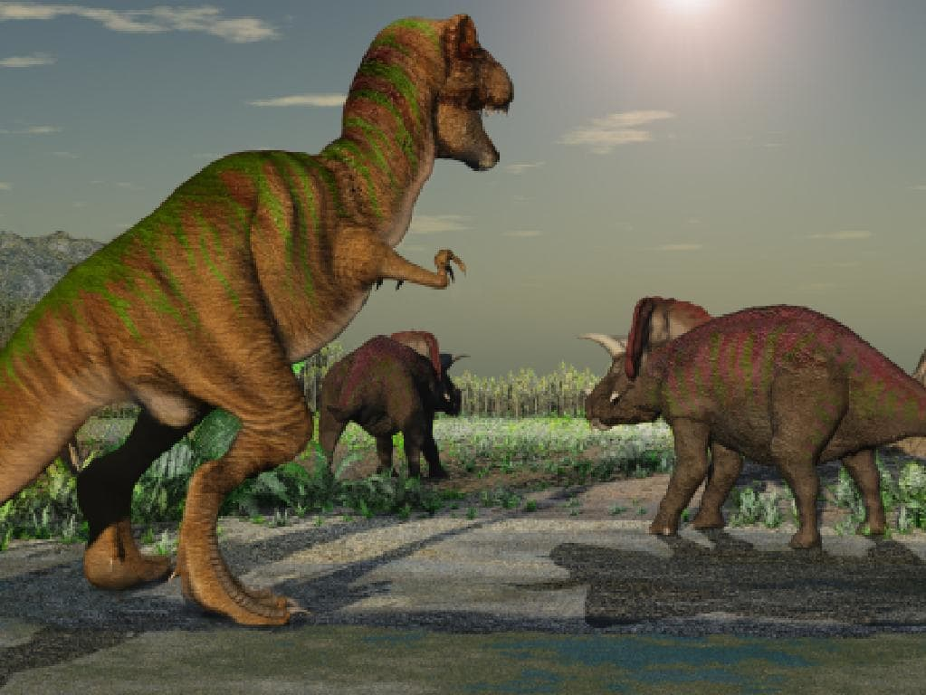 Experts believe the femur likely belonged to a sauropod, which is one biggest dinosaurs ever to roam earth.