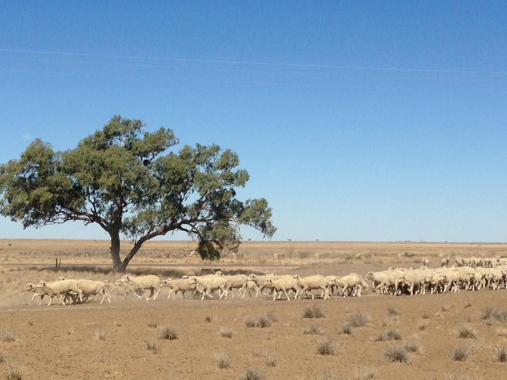 Drought in Queensland