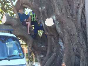 Protester in tree