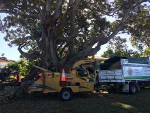 Fig tree protest Lennox Head