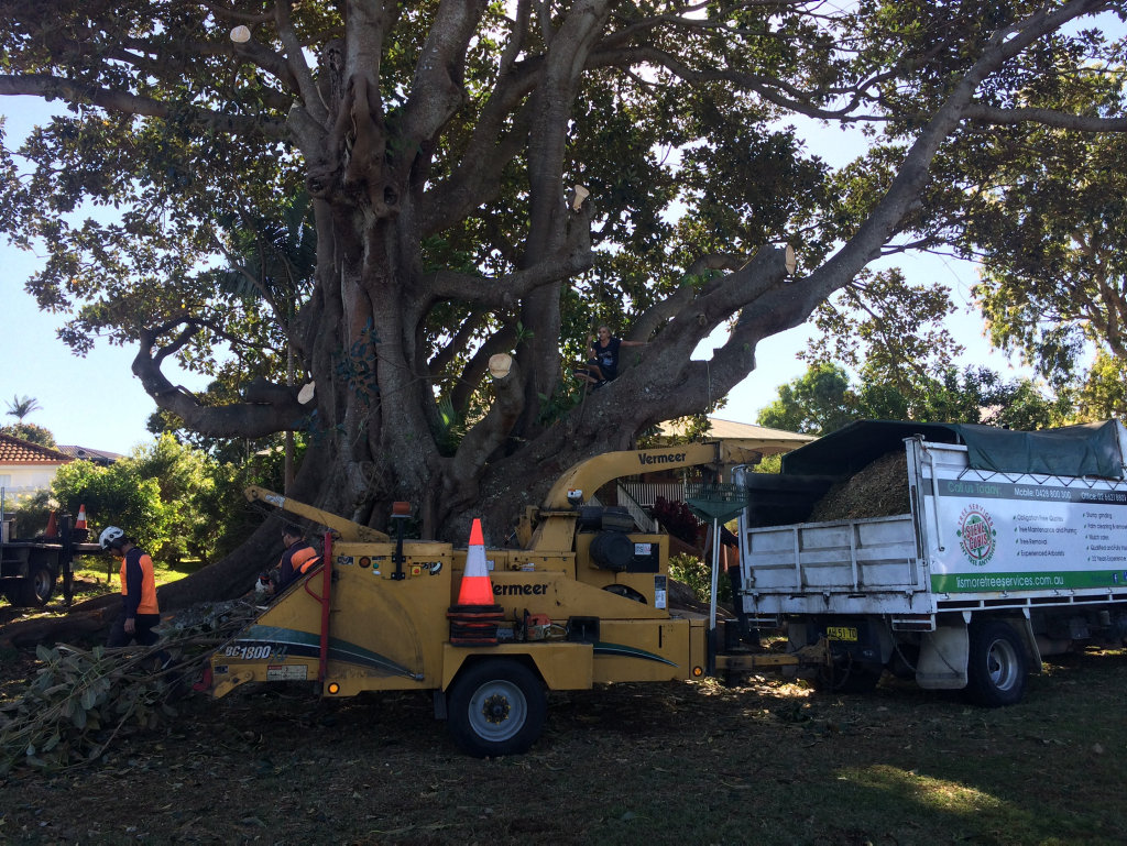 A second person has climbed the fig tree at Lennox Head to stop it being cut down.