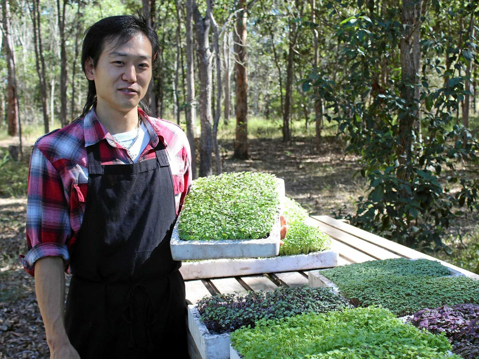 GREEN LIVING: SHO Production owner Shohei Kishishita started growing microherbs after noticing the ones he used as a chef would only last a few days.