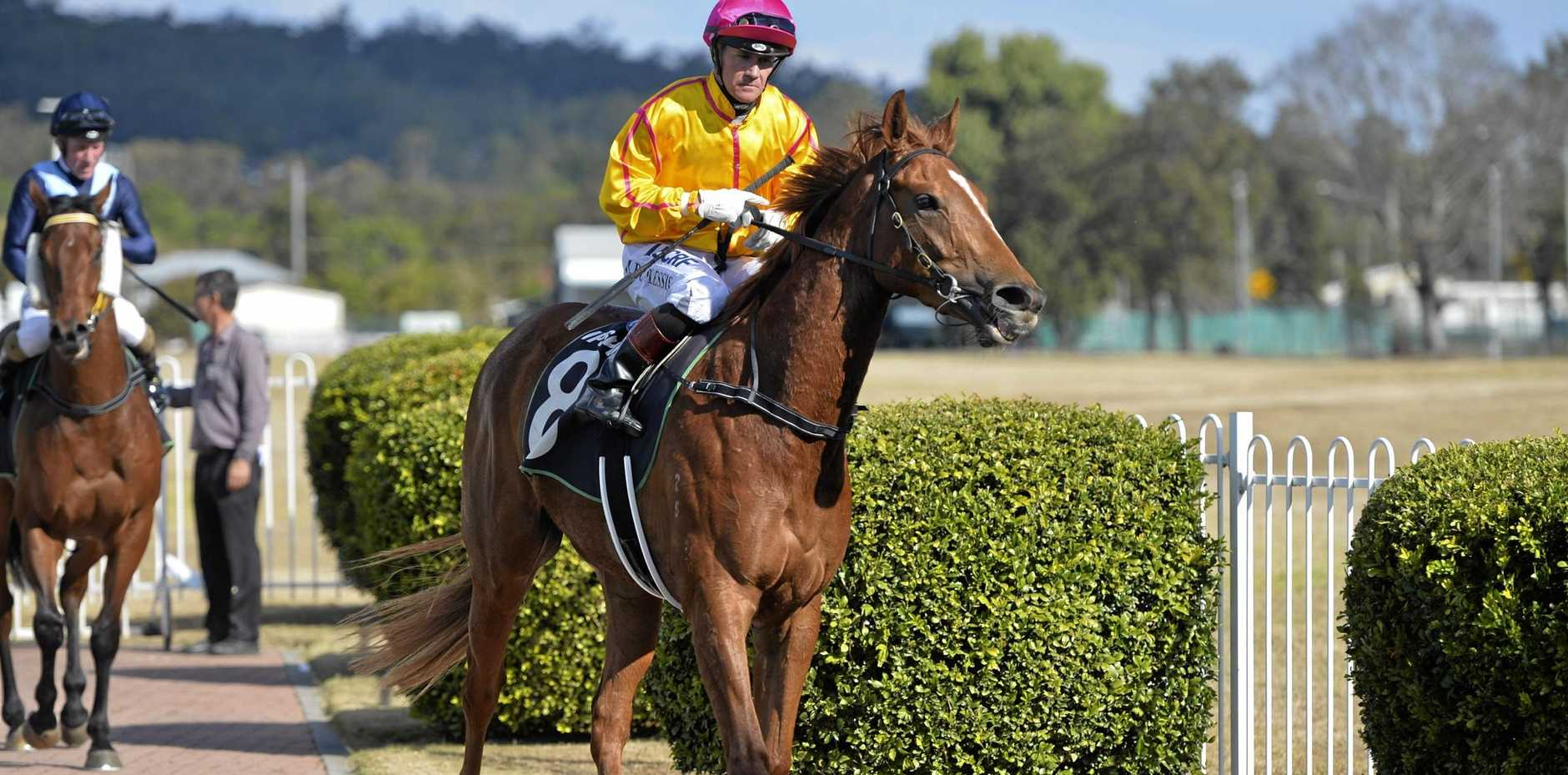 Jockey Mark Du Plessis guides Trail of Glory back into the Ipswich enclosure.
