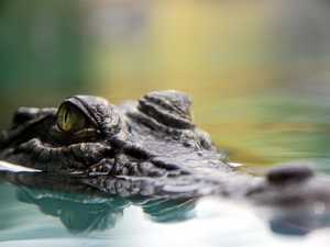 Gladstone's waterways monitored for crocodile activity