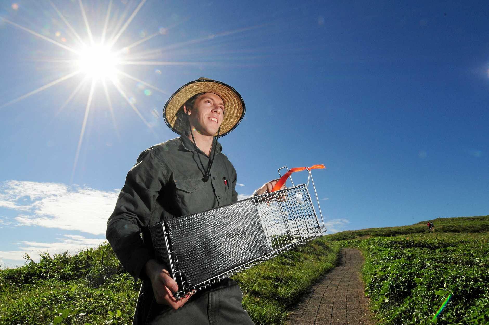 National Parks Dean Egan walks in a couple of rat traps on Muttonbird Island.    Pic Rob Wright