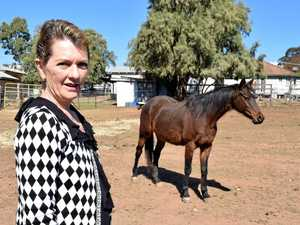 Kick from mare almost costs Warwick breeder her life