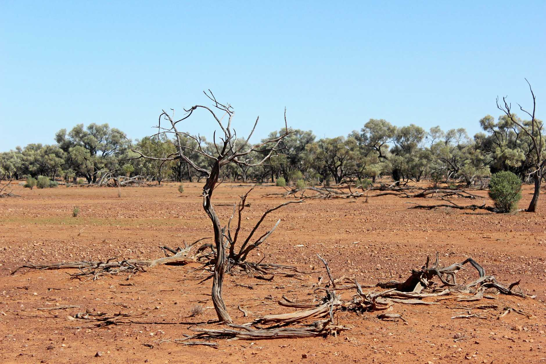 Parched pastures like this have inspired Woolworths to support the Rural Aid Buy A Bale program.