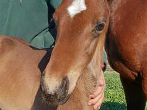 Lyndhurst Stud welcomes first foal of the season