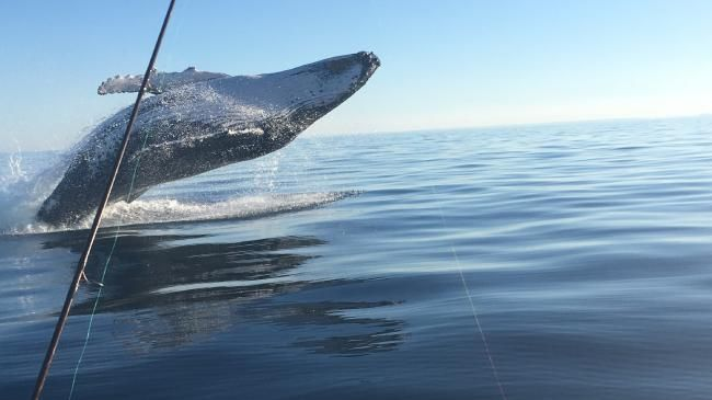 Fisherman catches amazing pic of breaching whale: Video