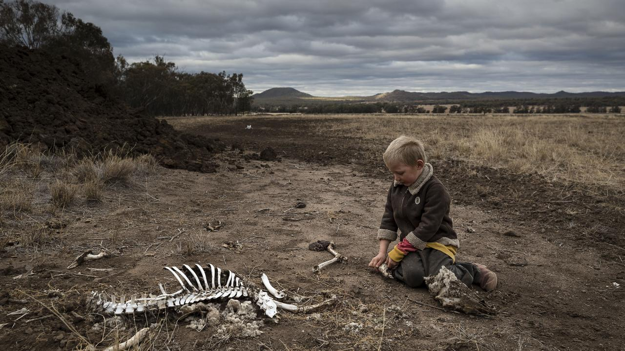 The drought has seen countless animals die in front of farmers' eyes. Picture: Brook Mitchell/Getty Images