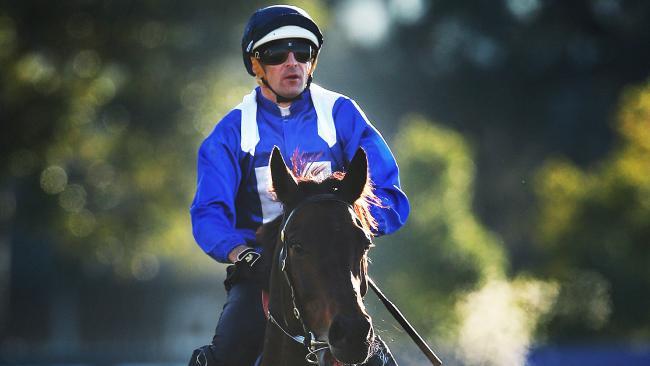 Winx, ridden by Hugh Bowman, returns after a barrier trial at Rosehill Gardens. Picture. Phil Hillyard