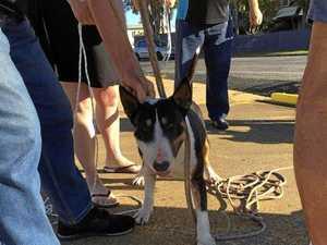 Dog in North Mackay attack under investigation