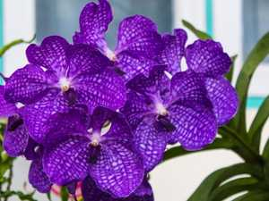 Search for orchid thieves after hundreds of plants vanish