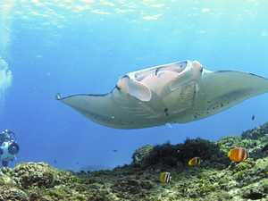 USC manta ray study reaches 10-year milestone
