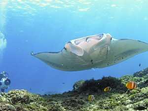 USC manta ray study reaches 10-year milestone