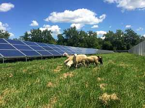 Solar sheep won't solve problem, judge told