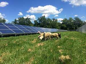 Solar sheep won't solve problem, judge told