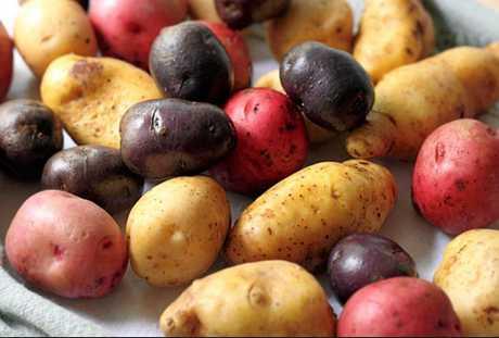 Gardening potato