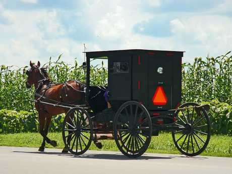 An Amish buggy makes its way through the cornfields carrying a more liberal sect member that permit the orange triangle signs.