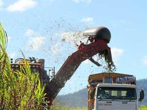 'David and Goliath': Mackay Sugar could have to repay $300K