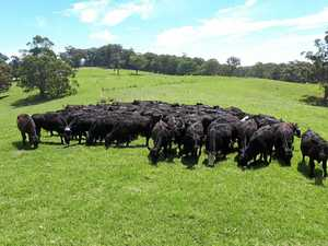 Police investigate theft of cattle worth $750,000