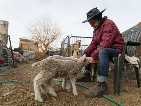 Coral Jerry, 80, on the family farm 'Marlborough', 40km outside Coonabarabran. She is currently raising 40 orphaned lambs, feeding them 4-5 times a day. Picture: Brook Mitchell/Getty Images