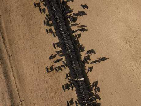 An bird's eye view of the cattle feeding operation on the property Toorawandi owned by Coonabrabran farmer Ambrose Doolan and his wife Lisa. Picture: Brook Mitchell/Getty Images
