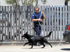 Dog squad called in, police hunt man in Nambour