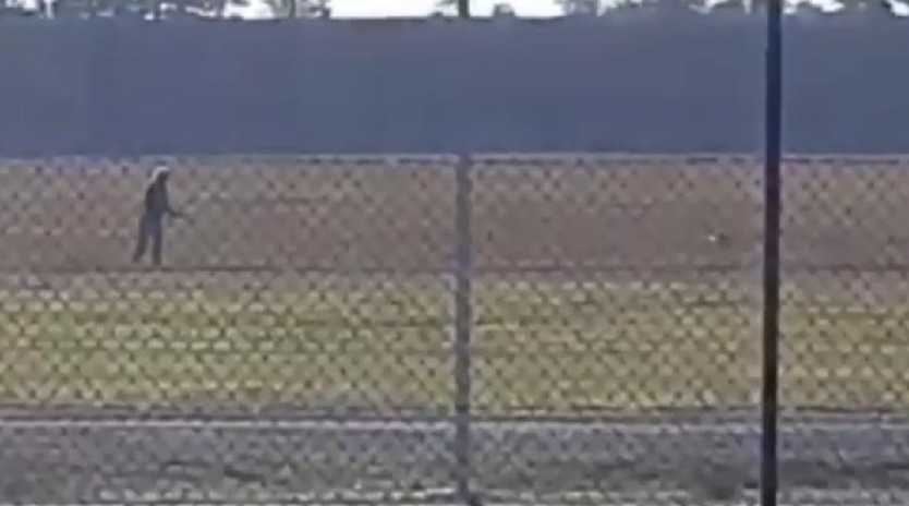 One of the shot birds can be seen to the left of the black pole after being shot. Picture: supplied