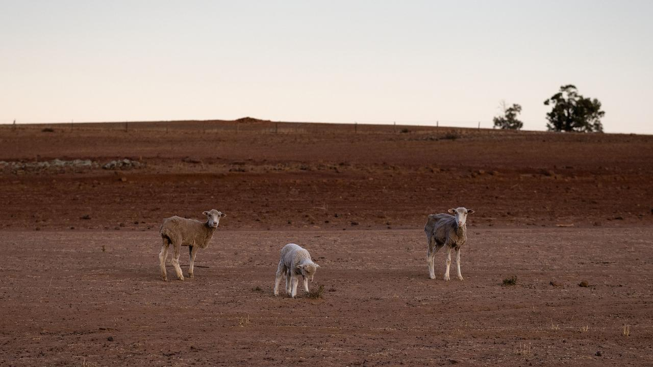 The Jerry family farm 'Marlborough', 40km outside Coonabarabran. Picture: Brook Mitchell/Getty Images