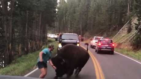 Authorities have warned people not to approach animals at the park. Picture: ViralHog