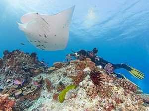Manta rays remain a mystery, even after 10-year study