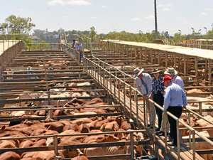 Saleyards expo in Roma
