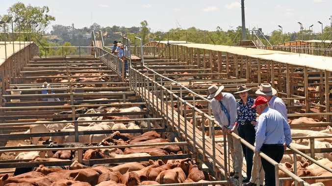 LOCAL HOST: Roma will host the 2019 Australian Livestock Markets Association national expo.