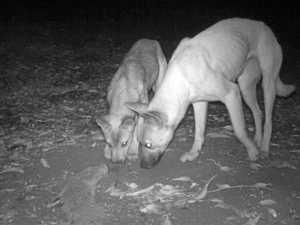 Public help crucial in tackling region's wild dogs