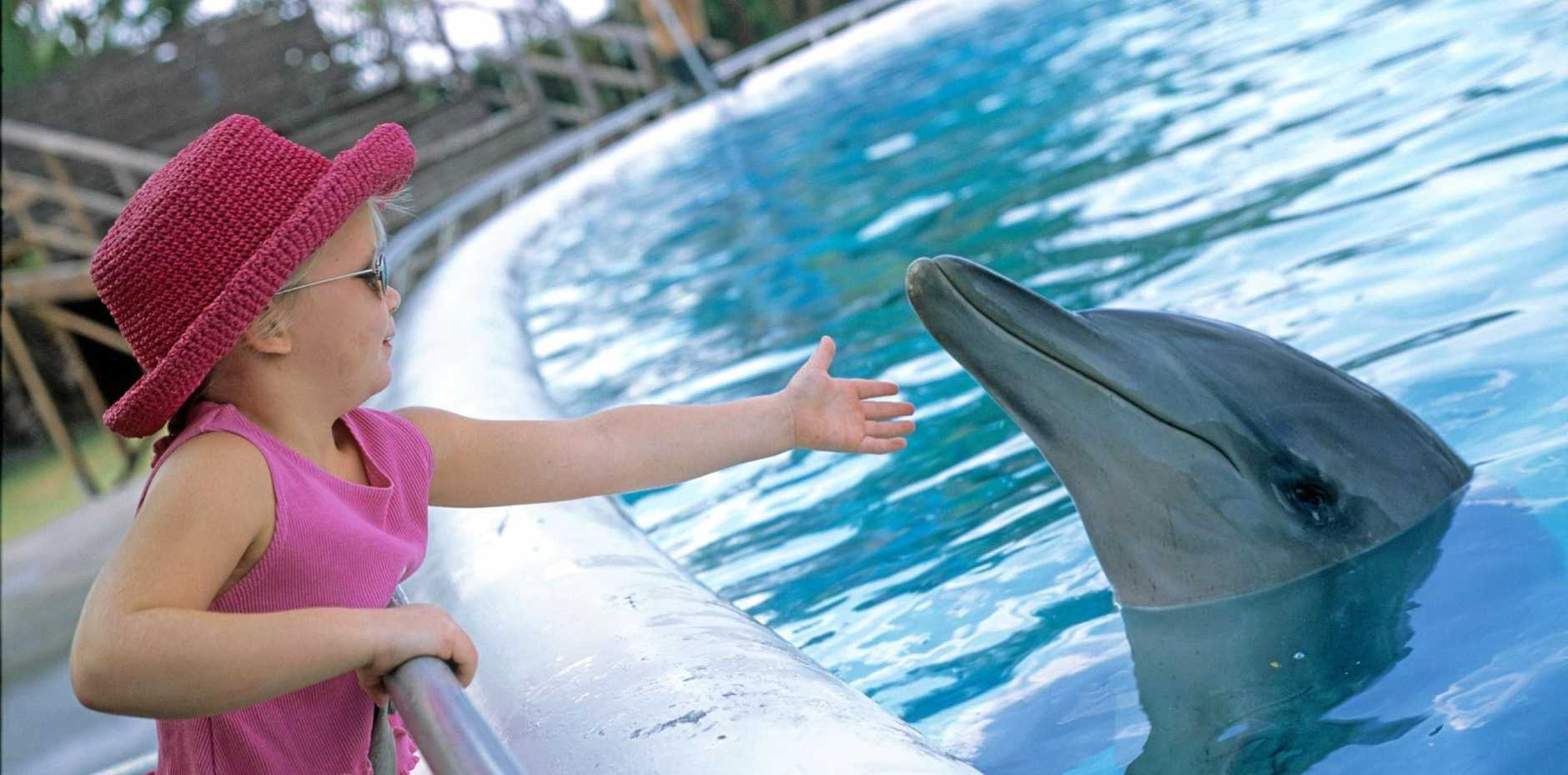Dolphin Marine Magic's five dolphins could be relocated to a sea pen in the harbour if the alternative turns out to be feasible and in the dolphin's best interests.