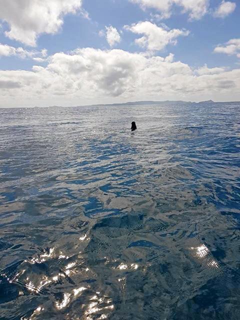 Seal off capricorn coast.Photo Contributed