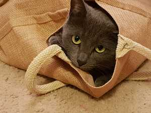 Cat lovers show their appreciation on International Cat Day