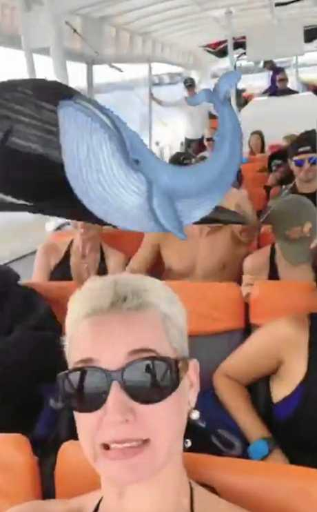 International music superstar Katy Perry was spotted on the Sunshine Coast yesterday going on a whale watching tour.