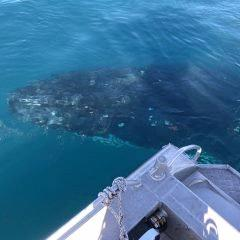 A whale that hung out with Sarina Police for an hour on Sunday August 5.