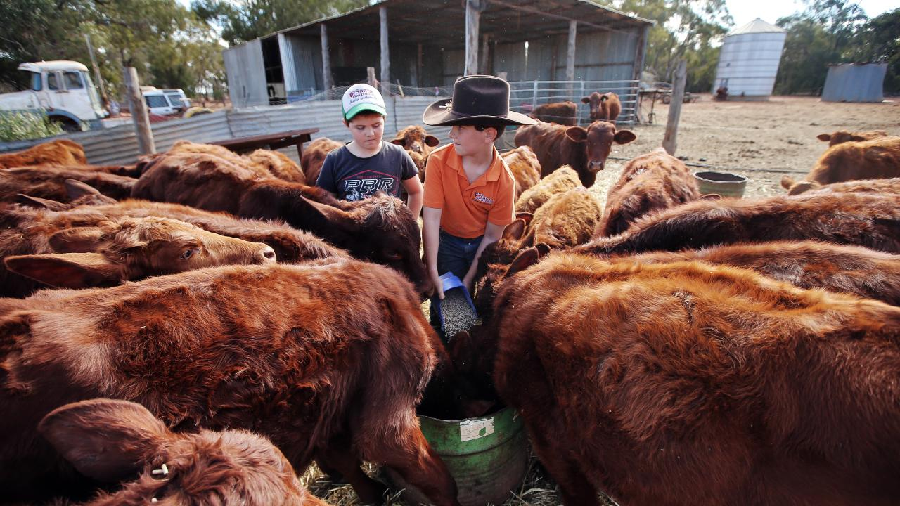 James (left) and Harrison O'Brien feed grain to hungry calves at the family's drought-ravaged farm in Five Ways in the middle of NSW. Picture: Sam Ruttyn