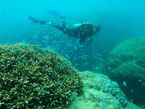 Coral bouncing back from bleaching