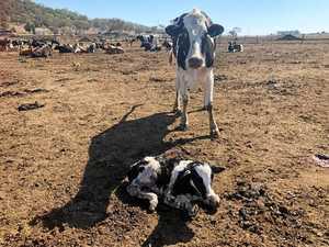 Drought stricken farmer's plea to the Burnett