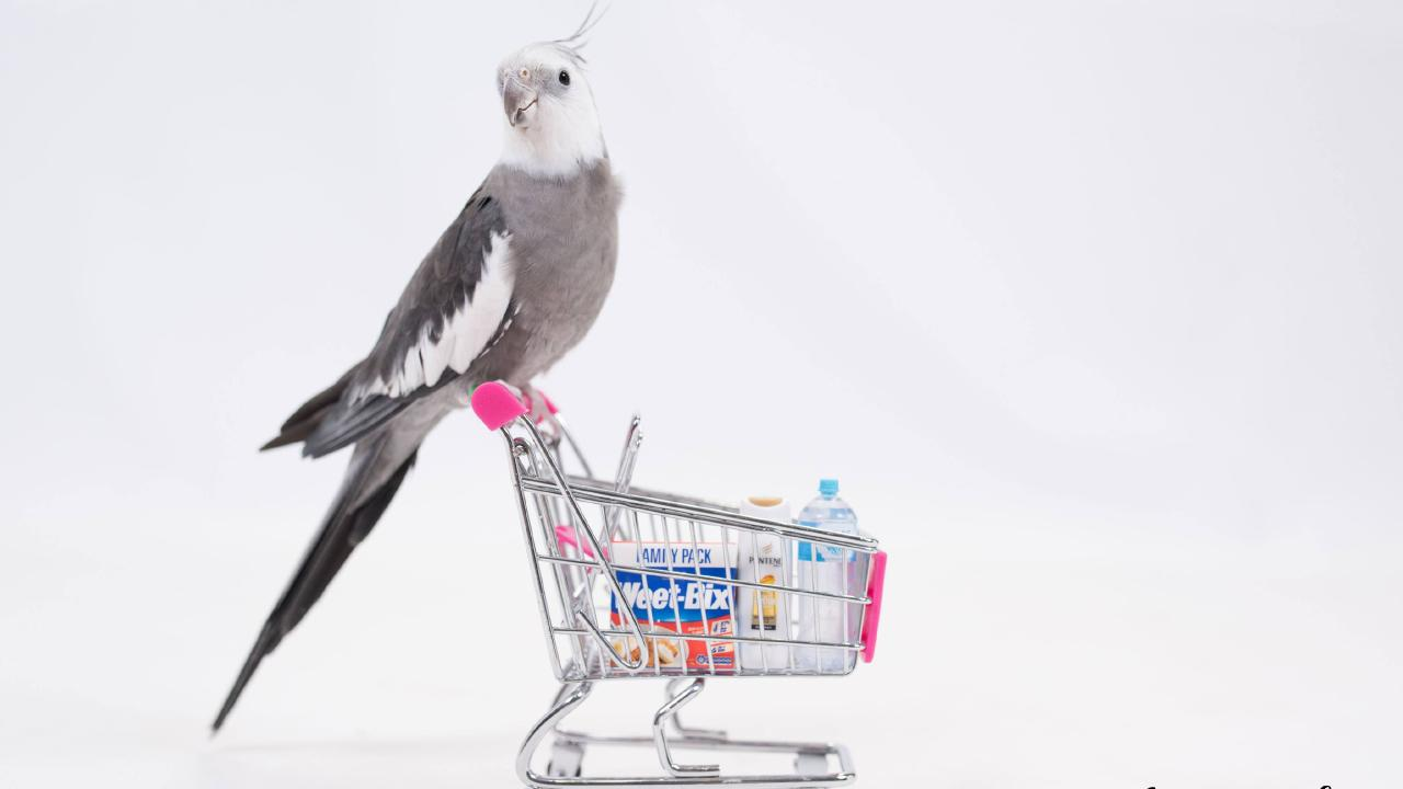 Bambi the cockatiel poses with Coles Little Shop items. Photo: Ali Ralph — Raw Seed Photography