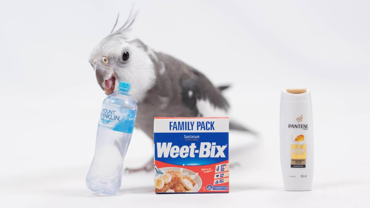 Bambi the cockatiel with Coles Little Shop items. Photo: Ali Ralph — Raw Seed Photography