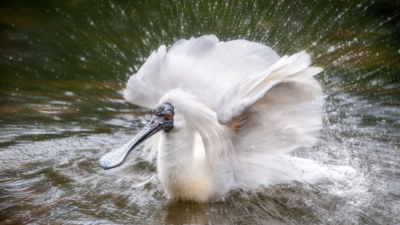 Birds are among Steve Parish's favourite animals to photograph. Photo: Steve Parish