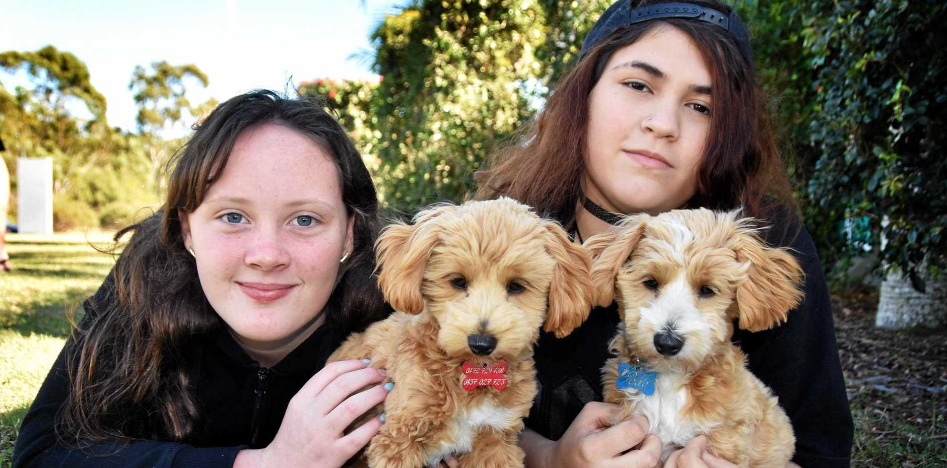 CUTE AND CUDDLY: Ashtyn and Kalia with therapy dogs Moana and Pablo.