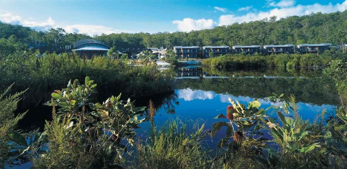Kingfisher Bay Resort is nestled amongst the wallum, much of which contains edible bush foods.